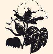 Zokni alkotórészei - Pamut